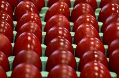 Τριακόσια εκατομμύρια κόκκινα αβγά τσουγκρίζονται το Πάσχα