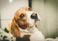 Αντιδράσεις για το νέο σχέδιο νόμου για τα ζώα συντροφιάς